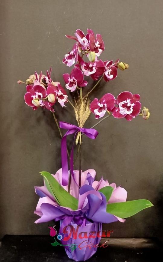 Mor Tek Dal Orkide