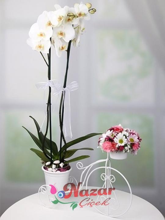 Beyaz Bisiklette Orkide