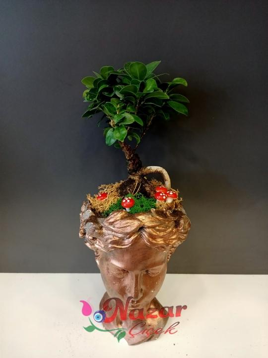Bonsai helen