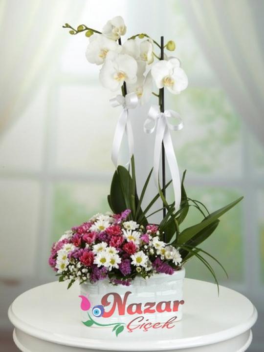 2 Dal Orkide ve Kır Çiçekleri