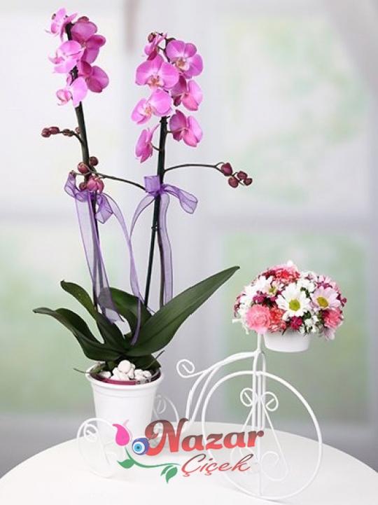Bisiklette Mor Orkide