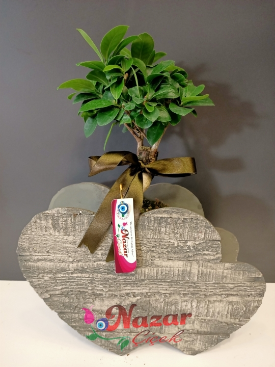 Kalp vazoda bonsai