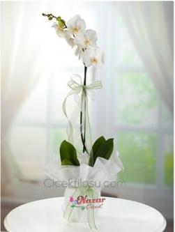 Beyaz Orkide Tek Dal