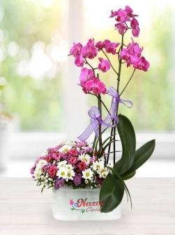 Çitlembik Orkide