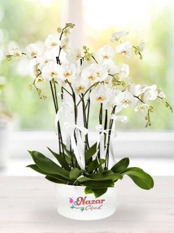 4 lü Beyaz Orkide