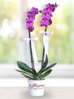 2 dal Mor Orkide Kampanyalı