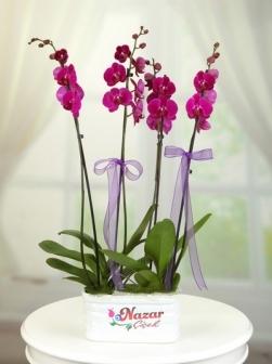 4 LÜ Mor Orkide