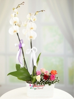 Orkide ve Renkli Güller
