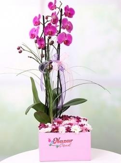 Orkide ve Kır Çiçekleri Kutulu
