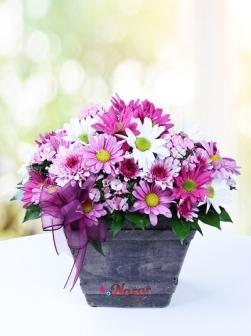 Taş Saksıda Kır çiçekleri