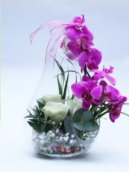 Armut Camda Gül ve Orkide